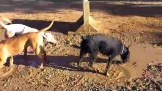 Грязная собака - счастливая собака