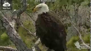 NORTHEAST FL Eagles USA -   I bet it is A2 - 2019 01 19 20 14 19