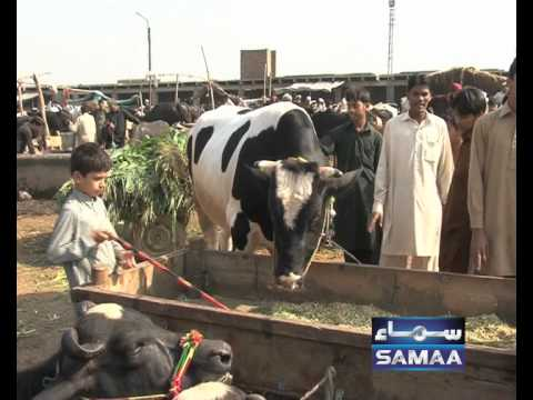 Bakra Mandi Brokers PSH by MeHdi 30 Oct 2011