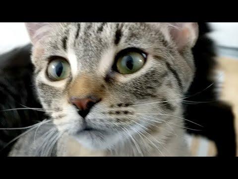 Kitten Close Up 2017-11-25