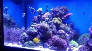 Akwarium morskie, zwierzęta i rafa z oferty Argus Aqua Design&Garden 695 80 70 66