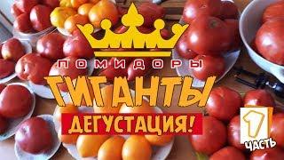 Помидоры ГИГАНТЫ дегустация! Обзор лучших сортов томатов