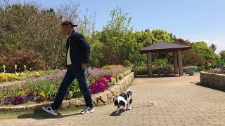 Amebaブログ「狆犬ちづひめ」2018年4月18日投稿をご覧ください。