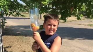 Лайфхак: как собрать абрикос без особых усилий