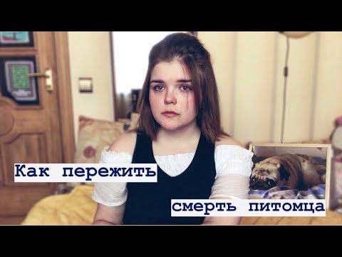 Моя История// Как Пережить Смерть Питомца