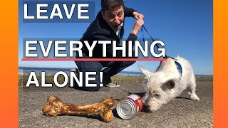 how-to-train-your-dog-to-leave-everything-alone-everywhere