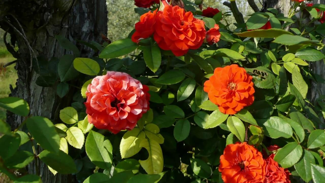 fleurs sechees pot pourri 28 images cote bastide fleurs d oranger potpourri oak manor. Black Bedroom Furniture Sets. Home Design Ideas