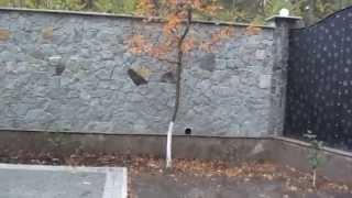 Забор из белого бутового камня. Обзор.