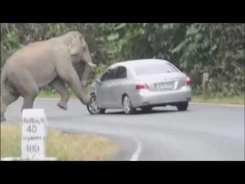 AMAZING ANIMAL ENCOUNTERS | WOW