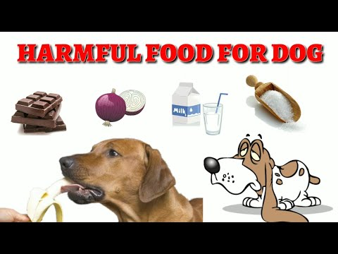 Harmful Food for Dogs ( At Mix ) - ( In Hindi ) Toxic Food Items