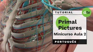 DOTLIB - Primal Pictures - Mini Curso (Aula 2)