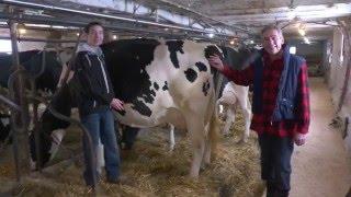 Ferme Vinnie, Première Vache Excellente en 2015