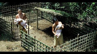 Build Mini Swimming Pool For Wild Pigs And Do The House For It