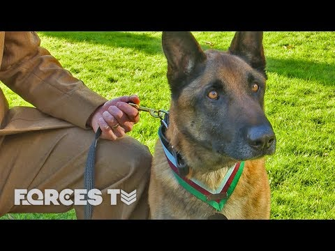Hero Dog Gets 'Victoria Cross' For Saving SBS Troops In Afghanistan | Forces TV
