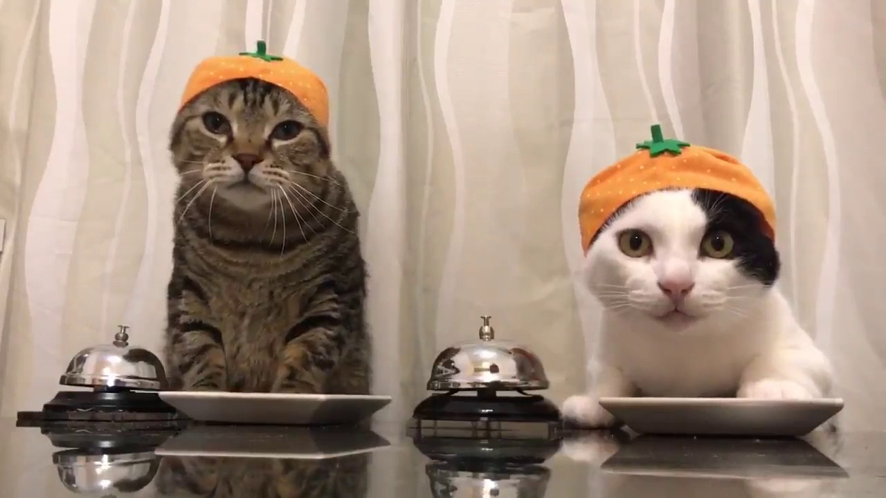 cats wearing satsuma mandarin hats ring bells