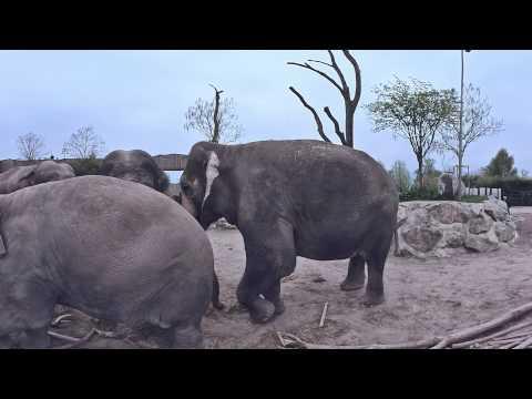 Knie goes virtual - Triff die Elefanten
