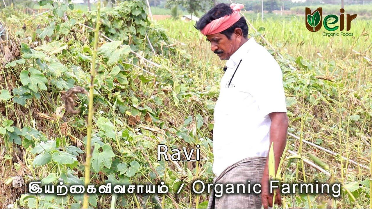 இயற்கை விவசாயம் / Organic Farming / Ravi | Ueir Organic Foods