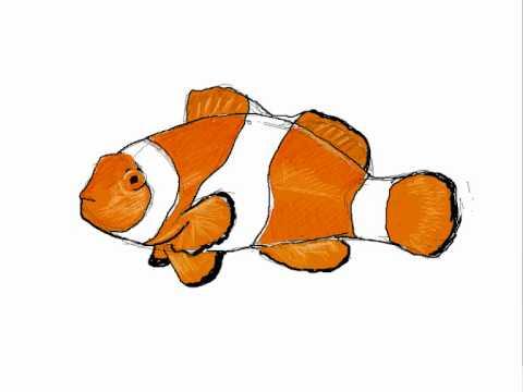 Como dibujar un pez payaso - Dibujos de animales - YouTube