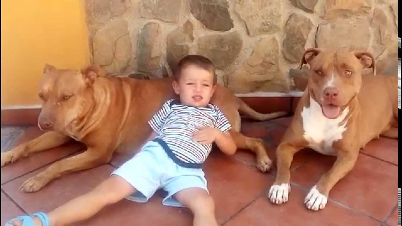 Resultado de imagen para pitbull y niños