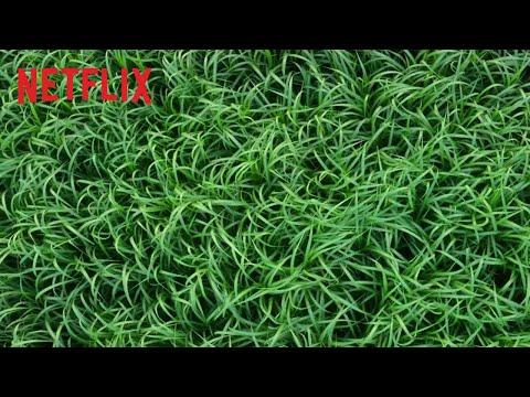 Im hohen Gras Kritik – Besteht der Gruselfilm auf Netflix?