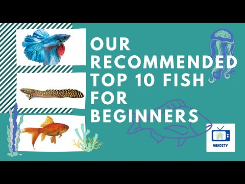 Our Recommended Top 10 Freshwater Fish For Beginners