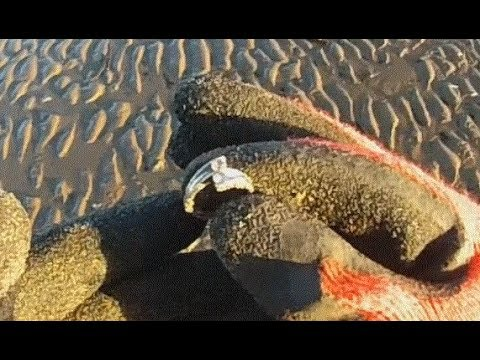 Metal Detecting Finds Uk ( 56 ) Silver Diamond Ring From BlackPool Beach