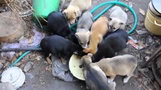 В центре Липецка замерзают и голодают 10 бездомных щенят