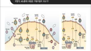 HDL 콜레스테롤은 무조건 좋은 콜레스테롤이다?