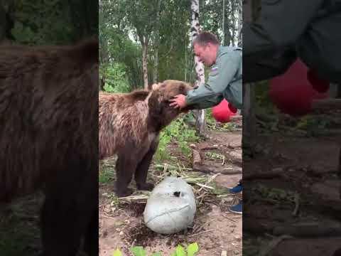 Медведь-счастливчик⭐🐻⭐ Прямая трансляция инстаграм @mansurbear 10.08.19
