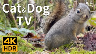 Cat and Dog TV 4K HDR: Tiny Barking Squirrel and Cute Birds  10bit Color