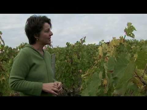 Вино sangiovese puglia solano отзывы