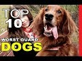 Top 10 Worst Guard Dog Breeds