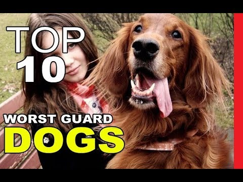 top-10-worst-guard-dog-breeds
