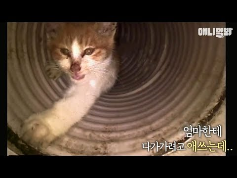 Tiny kitten dying in drain, rescued and   Feisty! - YouTube