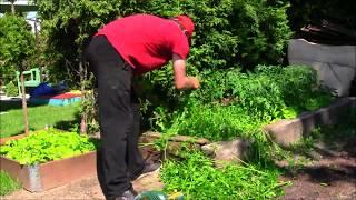GARDEN 89 - Greengrocer - Hedge formation - Bean patch. Grządki warzywne. Formowanie żywopłotu.