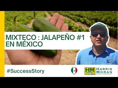 HMCLAUSE Chile Mixteco