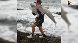 Guy Carries Shark Back To The Ocean