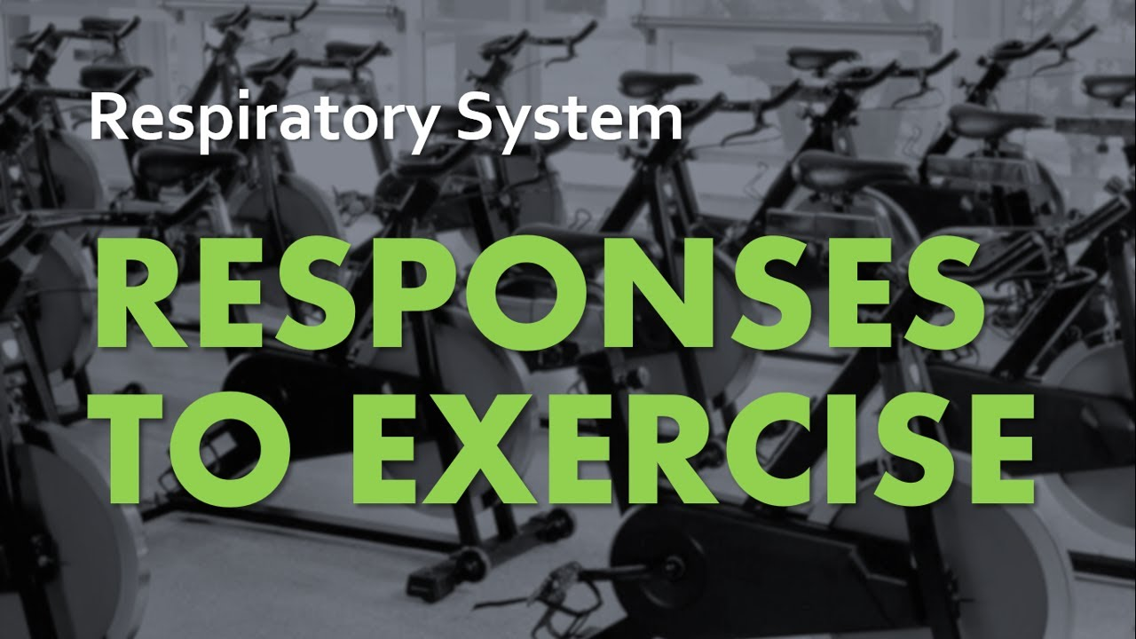 A&P Respiratory System 06 - Responses to Exercise - YouTube