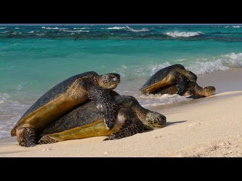 Animals Of The Galapagos Islands | Excellent Wildlife Documentary