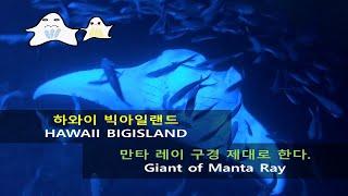 [신혼여행] 투어 추천: 하와이 빅아일랜드 만타 투어 …