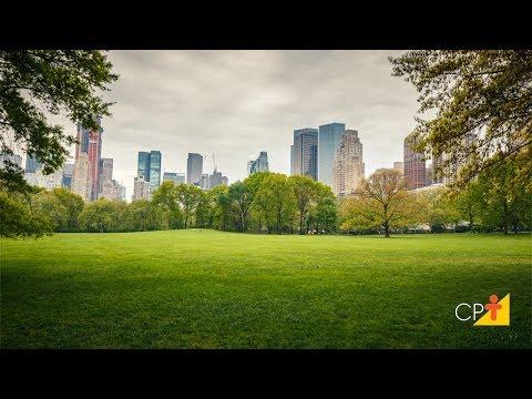 Benefícios das Árvores nas Cidades - Aula III Florestas Urbanas - Professor Eventual Aula IV