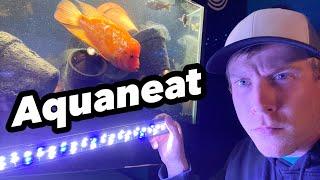 Aquaneat LED Light Review - Full Spectrum