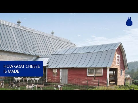 Vermont Creamery: Where the Best Goats Make the Best Goat Cheese | HuffPost Life