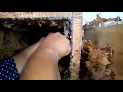 Se vende miel de abeja melipona.huejutla de Reyes Hidalgo