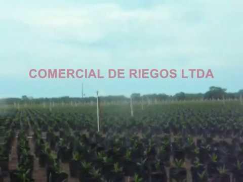 RIEGO POR ASPERSIÓN   Cultivo de Palma Africana 🌴   Irrigación   EQUIPOS DE RIEGO  