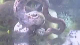 piranha vs snake (boa constrictor. baske)