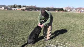 Dog Training: Fetch - Improving The Retrieve