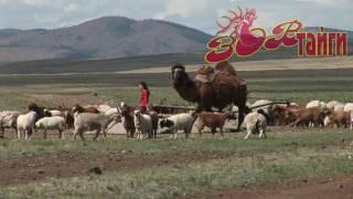 Дикая Монголия. Часть 2 Wild Mongolia Part 2. (HD)(Music by Cuthberth - Introduction To Nomads (2008) Продолжение зарисовок о стране просторов - Монголии. . JOIN QUIZGROUP PARTNER PROGRAM: ..., 2009-08-10T02:58:15.000Z)