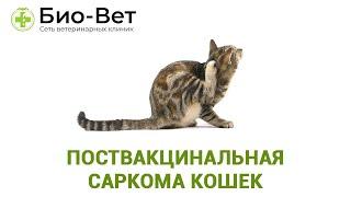 Поствакцинальная саркома кошек. Ветеринарная клиника Био-Вет.