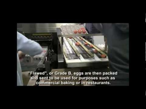 Grading & Packaging Organic Meadow Organic Eggs ~ How it's Made